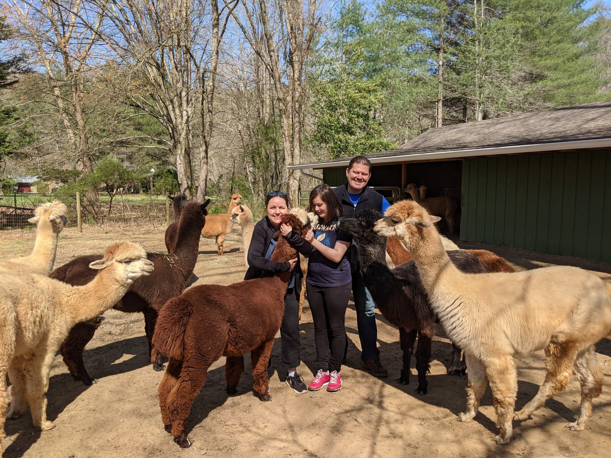 family petting llamas